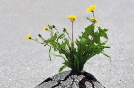 Bruger du modstand som stopklods eller løftestang?